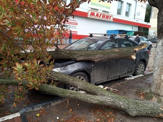 Соцсети: в Рязани дерево упало на иномарку, никто не пострадал