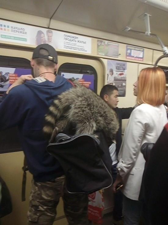 В Новосибирском метро сфотографировали милого енотика