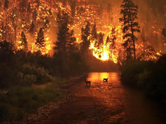 В Новосибирской области за неделю дачники 70 раз подожгли лес