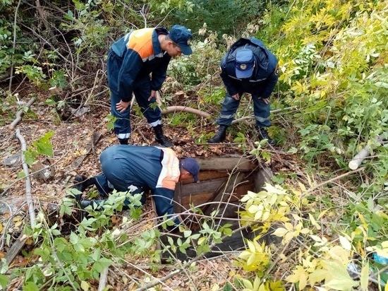 Двух собак, упавших в глубокий колодец, спасли в Ростовской области