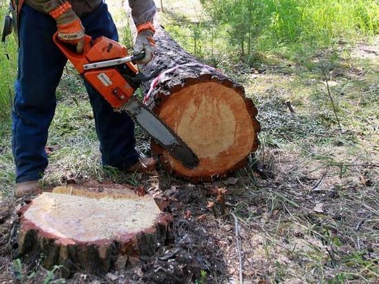 Прокуратура помешала минлеса Приангарья незаконно продать 500 тыс. кубометров леса