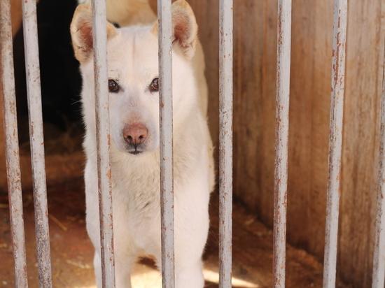 Война людей и собак: почему не ловят бродячих животных
