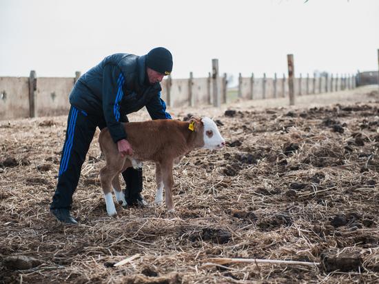 В Астраханской области фермеры могут получить грант до 3 млн рублей