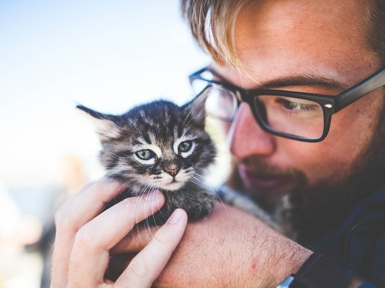 Кошки оказались привязаны к человеку не меньше собак