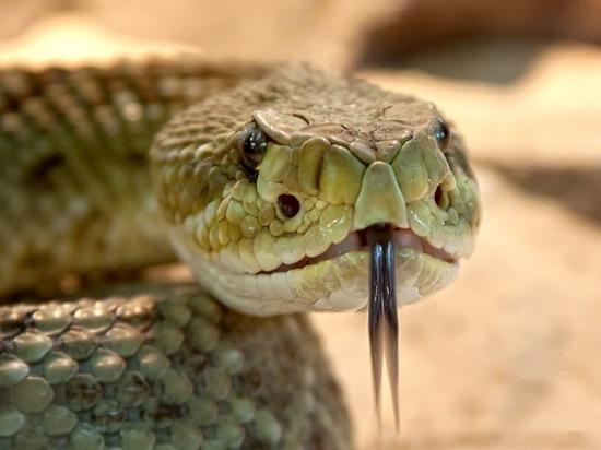 Берегись гада: что категорически нельзя делать в Змеиный день - 25 сентября