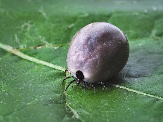 В размножении опасных насекомых обвинили власть