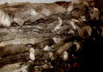 Предприятие «Сибирский олень» из Сыктывкара переедет в Салехард