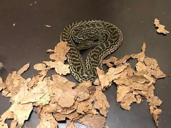 В Новосибирский зоопарк прибыл самец парагвайской анаконды