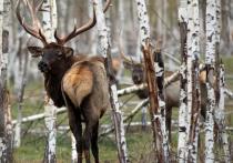Правила обращения с дикими животными в охотничьих угодьях разработало Минприроды