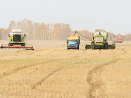 В Маслянинском и Сузунском районах НСО закончили убирать зерновые