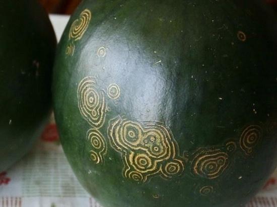 У новосибирской пенсионерки выросли арбузы с таинственными знаками