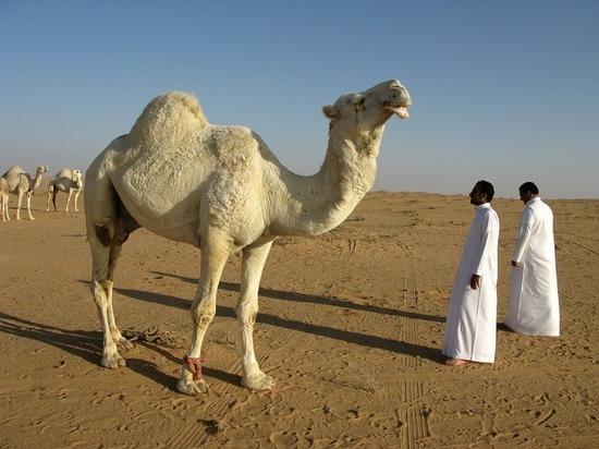 Саудовская Аравия впервые в истории пустит туристов