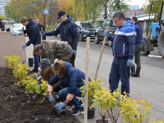 В Иванове начался месячник озеленения