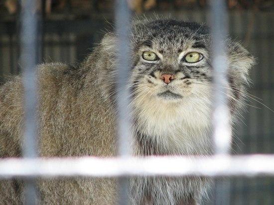Два суровых котика улетели из Новосибирска в Германию