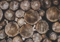 Житель Республики Алтай попытался погасить долг по алиментам дровами