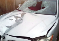 Задержан водитель, насмерть сбивший пешехода в Солотче