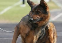 Правила содержания служебных собак разработало МЧС