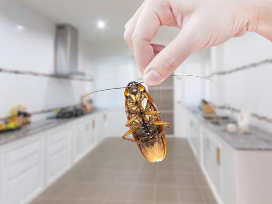 В Воронеже закрыли три столовые из-за тараканов