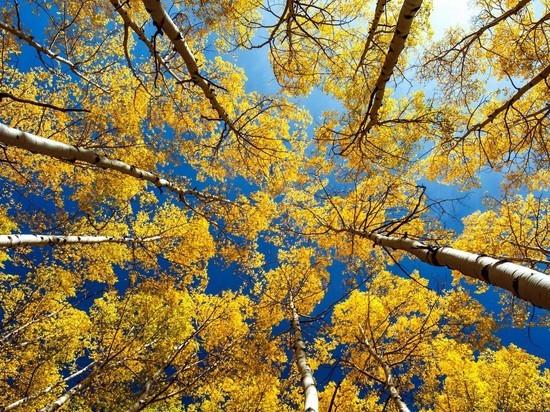 Второе бабье лето в Новосибирске начнется в среду