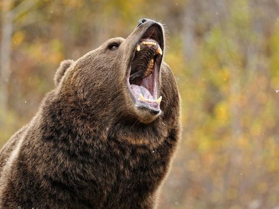 Напавшего на мужчину медведя застрелили возле Токчина