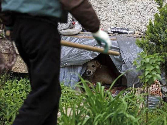 В Ивановской области местные жители подрались с мужчиной, занимавшимся отловом бродячих собак