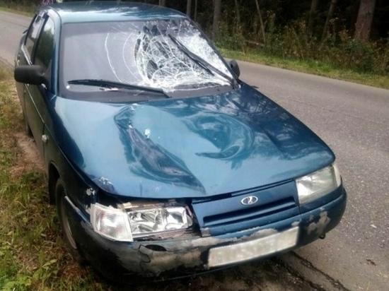 В Ивановской области, в ДТП с участием лося, пострадала мотоциклистка