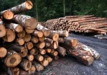 Летние лесные пожары, а точнее, поднявшийся вокруг них невиданный сетевой ажиотаж, помогли сдвинуть с мертвой точки вопрос спасения нашего леса
