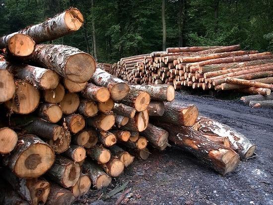 Русский лес на грани исчезновения: что делать