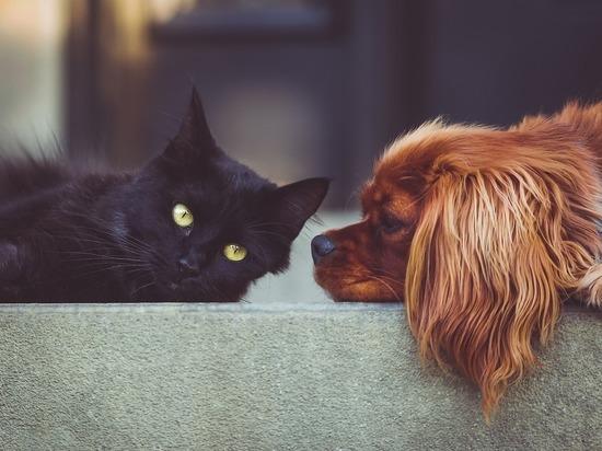 Подготовлен список штрафов для владельцев собак: накажут всех