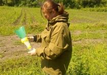 Словно не травили: шелкопряд снова одолел Томскую область