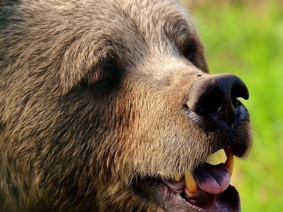 Глава поселения в Забайкалье, где медведь ест собак, рассказала о ситуации