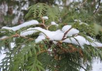 Резкое похолодание в столице на грядущих выходных прогнозируют метеорологи
