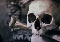 Человеческие останки нашли во время строительства магазина в Алтайском крае