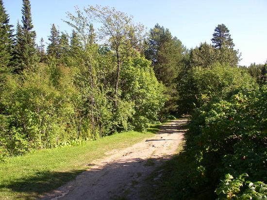 В Вожегодском районе выделено 1800 га под проект «Вологодский гектар»