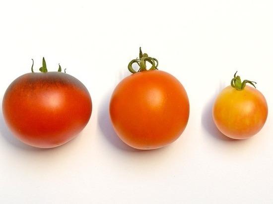 Уникальное свойство помидоров обнаружили медики