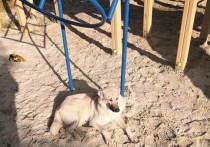 Жители Ноябрьска поспорили из-за собаки на детской площадке