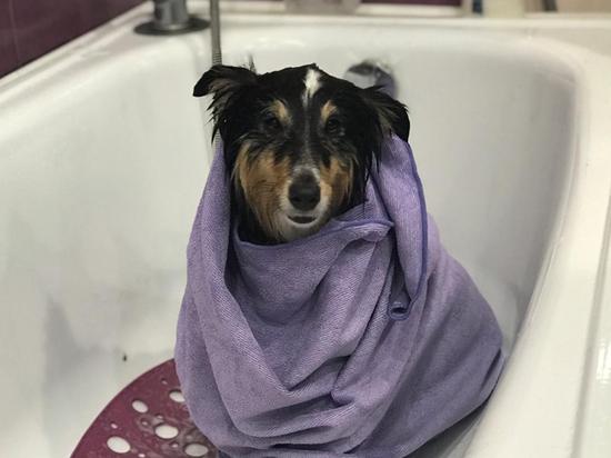 Собака, избитая до полусмерти хозяйкой, обрела новый дом