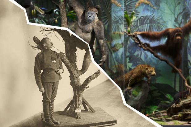 Трофеи царской охоты прятали от Сталина: удивительные тайны Дарвиновского музея