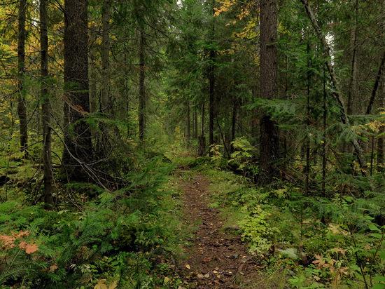 Погибшая от лап медведя забайкалка ушла в лес два дня назад – следствие