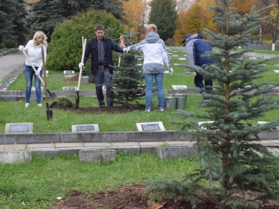 Тридцать сизых елей украсили кладбище в Балино