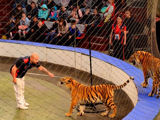 В Пермском цирке прошел необычный урок для особенных детей