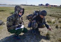 Ученые Ямала закончили сезон изучения Арктики