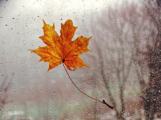 Воронежцев ждет дождливая и холодная неделя