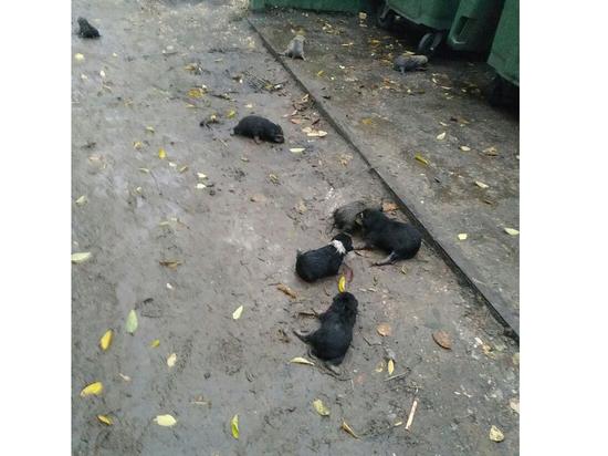 В Тамбове живодеры задушили девять щенков