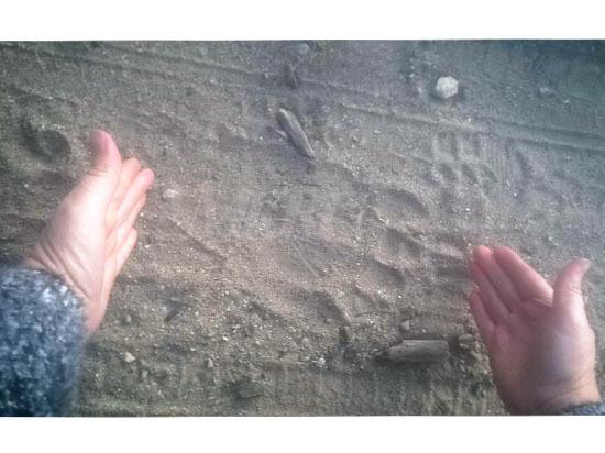 Следы пары медведей нашли в 50 метрах от домов в Атамановке