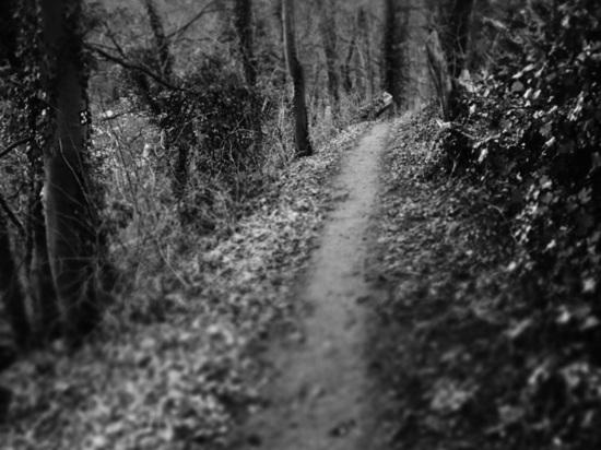 Как в фильме ужасов: дети из барнаульского поселка идут через лес с бездомными собаками, чтобы попасть в школу