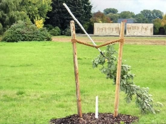 Вандализм в Германии: Спиленное мемориальное дерево жертвам NSU будет заменено