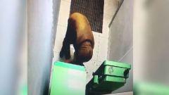Житель Петрозаводска подорвался при попытке взломать банкомат в Череповце: видео