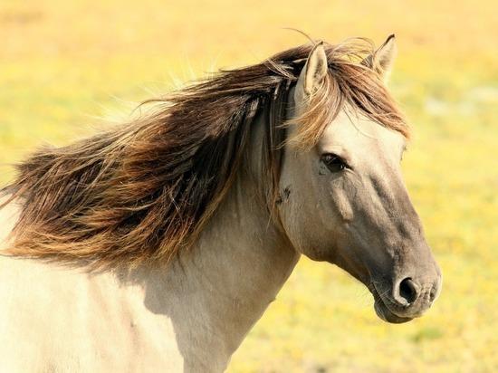 Кемеровчанку расстроили кони, которые бродят вблизи новостроек