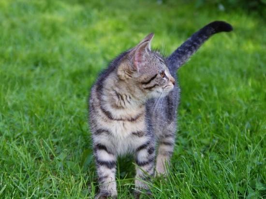 В Новосибирской области мужчина попал под суд за стрельбу по котенку